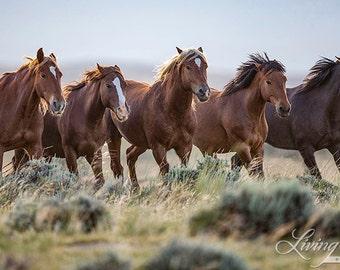 Wild Family Runs for the Waterhole - Fine Art Wild Horse Photograph - Wild Horse - Medicine Hat - Fine Art Print