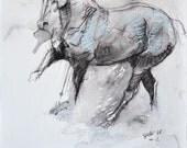 Canter Horse, Animal, Mod...