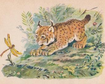 "V. Frolov ""Lynx cub"" Postcard -- 1956"