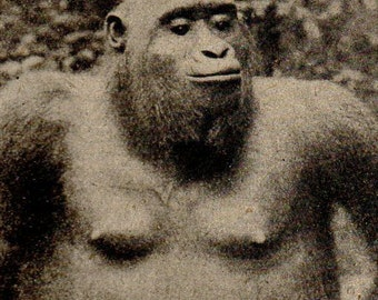 Vintage 1911 Gorilla print Antique photogravure print, animal print, b/w bookplate art print, nature wall print, wall art