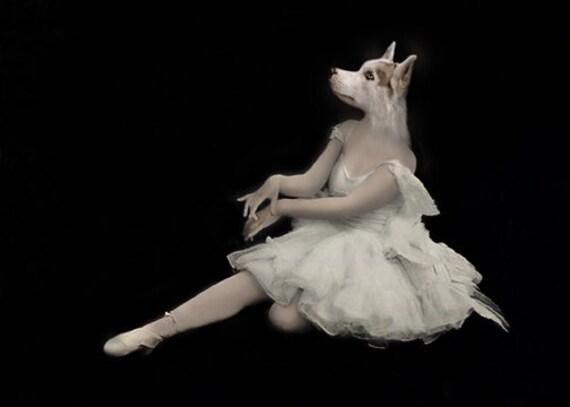 Pavlova, Ballerina Dog Print, Vintage Ballerina,  Anthropomorphic, Siberian Husky, Whimsical Art, Altered Photo, Wall Decor, Fine Art Print