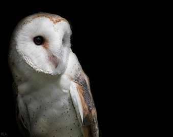 Barn Owl, Bird Photography, Owl Decor, Home And Cabin And Office Decor,