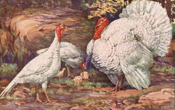 Turkeys and Guinea Fowl Print Hashime Murayama White Holland Turkeys Wall Decor