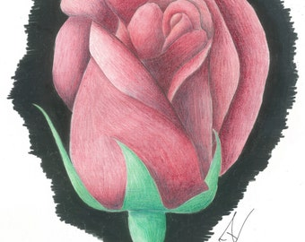Single Red Rose Bud with Black Background Colored Pencil Illustration(CP002)
