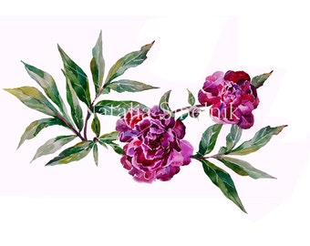 Two dark maroon peonies digital download from original watercolor in purple and green colors, cottage chic style painting clip art