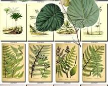 LEAVES GRASS-100 Collection of 165 vintage images Cocos Palm Bactris Moonwort fern botanical High resolution digital download printable herb