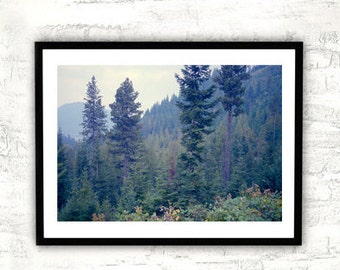 Forest photography, fir trees art print, woodland nature picture, landscape photography, large forest wall art, teal green cabin wall decor