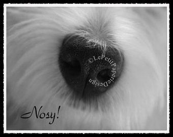Westie Dog Nosy Photography Décor Black & White Photo Custom Printable West Highland White Terrier Dog Gift Border/Wording Color Options?