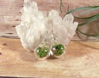 Moss earrings, real moss studs, terrarium earrings, reindeer moss, globe stud earrings