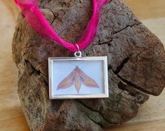Moth Necklace, Elephant Hawk-moth Miniature Picture Frame Pendant, Organza Cord