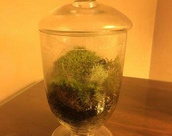 Moss Terrarium with fisherman on stream