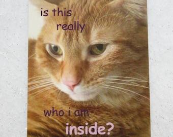 Existential Cat Sticker - Mulan Kitty Sticker - Purple Comic Sans - Trendy, Meow, Just So Post-Modern, Weird, Mulan Lyrics