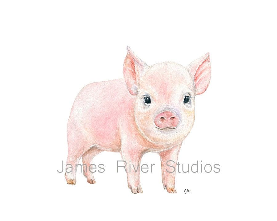 Baby piglet drawing