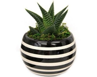 """Magnetized Classic Planter with Live Plant - 3 x 3 x 5"""" - Striped"""