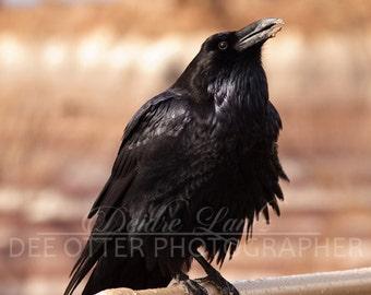 Petrified Raven 8x10 photo print