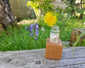Plantae - Cube shaped wood and glass vase, wood plant holder