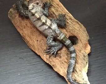 Ctenosaura bakeri figurine.