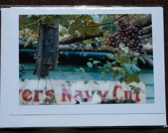 Greetings card: The vines flourish amidst the decay
