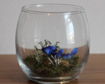 Real Woodland Caterpillar Terrarium - Underwater Caterpillar. Handmade, Ornamental Gift ~