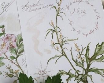 "Digital print of Mugwort, Artemesia vulgaris - botanical illustration, botanical print, floral illustration - 8.5 x 11"""