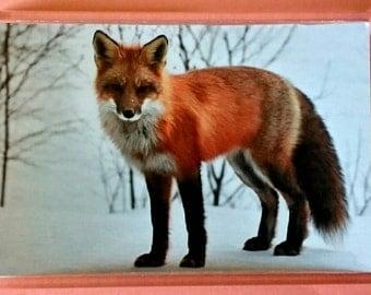 Fox - Jumbo Acrylic Fridge Magnet