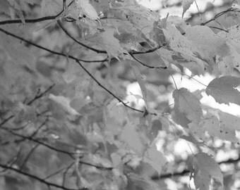 Gray Leaves 1124