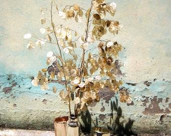 Flower Pot - Vasi porta fiori