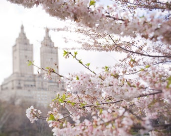 The San Remo building with cherry blossoms in Central Park, New York City