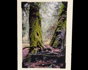 BLANK CARD, photo note card, birthday card, Christmas gift, handmade, special occasion, old growth forest trees, wall art, turtlesandpeace