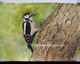 Great Spotted Woodpecker Watercolour painting. From my Garden Birds picture collection. This is the original signed painting. Not a print.