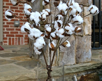 "Cotton Stems~Cotton Boll~30"" Stem~Rustic Wedding-Barnwood~Rustic Cotton Branches~Rustic decor~farmhouse decor~fixer upper style~country chic"