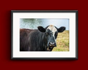 Cow Face - Farm Photography Farmyard Fine Art Cow Photo