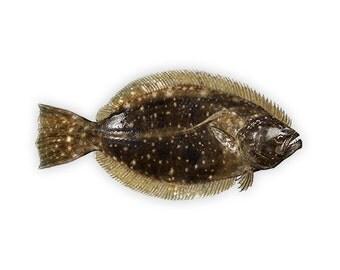 Flounder Decal - Flounder Sticker