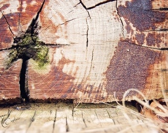 Wood, Fine Art Photography, Stock Photo, Home Decor, Greeting Card Photo