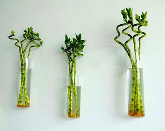 Set of 9 Rhombus Glass Wall Vase Indoor Plants Wall Planters