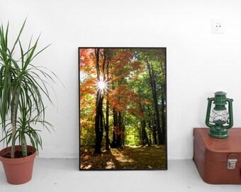 sun, fall foliage, woods, path, danvers, massachusetts, new england, photography, fine art print