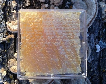 Comb Honey (large size)