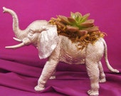 Metallic Silver Elephant Planter with Succulent, Fun Upscale Talkative Display Piece. Order by 12/19 for Christmas Delivery!!!!