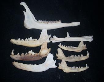 Animal bones lot #2
