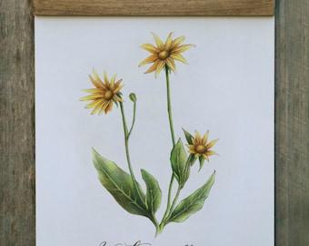 Wall Hanging, Wall Art, Home Decor, Art Print, California Wildflower, Botanical Illustration, Wood Trimmed, FREE SHIPPING