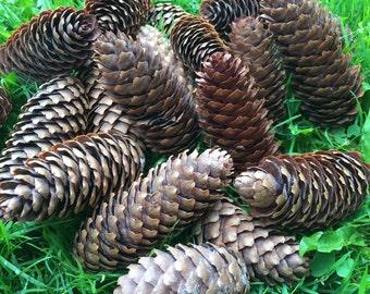 Pine Cones Decor Natural Ornament