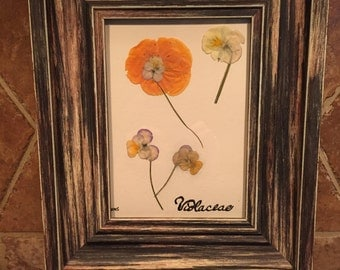 Framed botanical - panzies