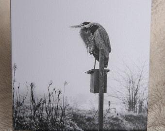 Heron; Black & White on Gallery Wrap Canvas