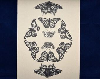 Butterfly specimen print, butterfly pointillism drawing, dot work, taxidermy art, butterfly print, butterfly art, boho art