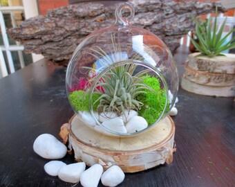 Pink and Green Air Plant Terrarium Kit/Minimalist Hanging Glass Air Plant Terrarium/DIY Glass Tillandsia Terrarium Kit