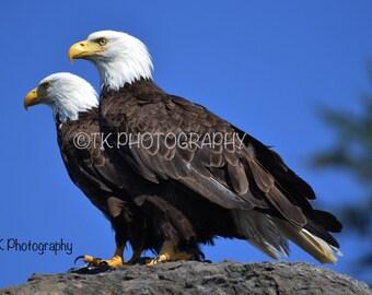 West Coast Eagles. 4x6