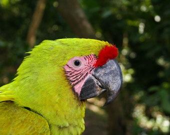 Green Macaw Digital Download