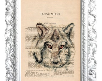 Wolf. Print on French publication of illustration. 28x19cm.