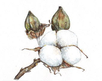 Cotton flower watercolor painting