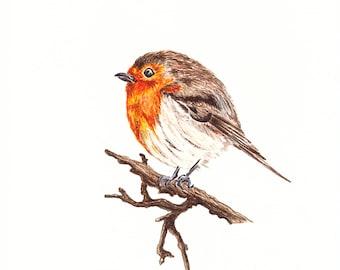 Hand painted greeting card, robin, bird